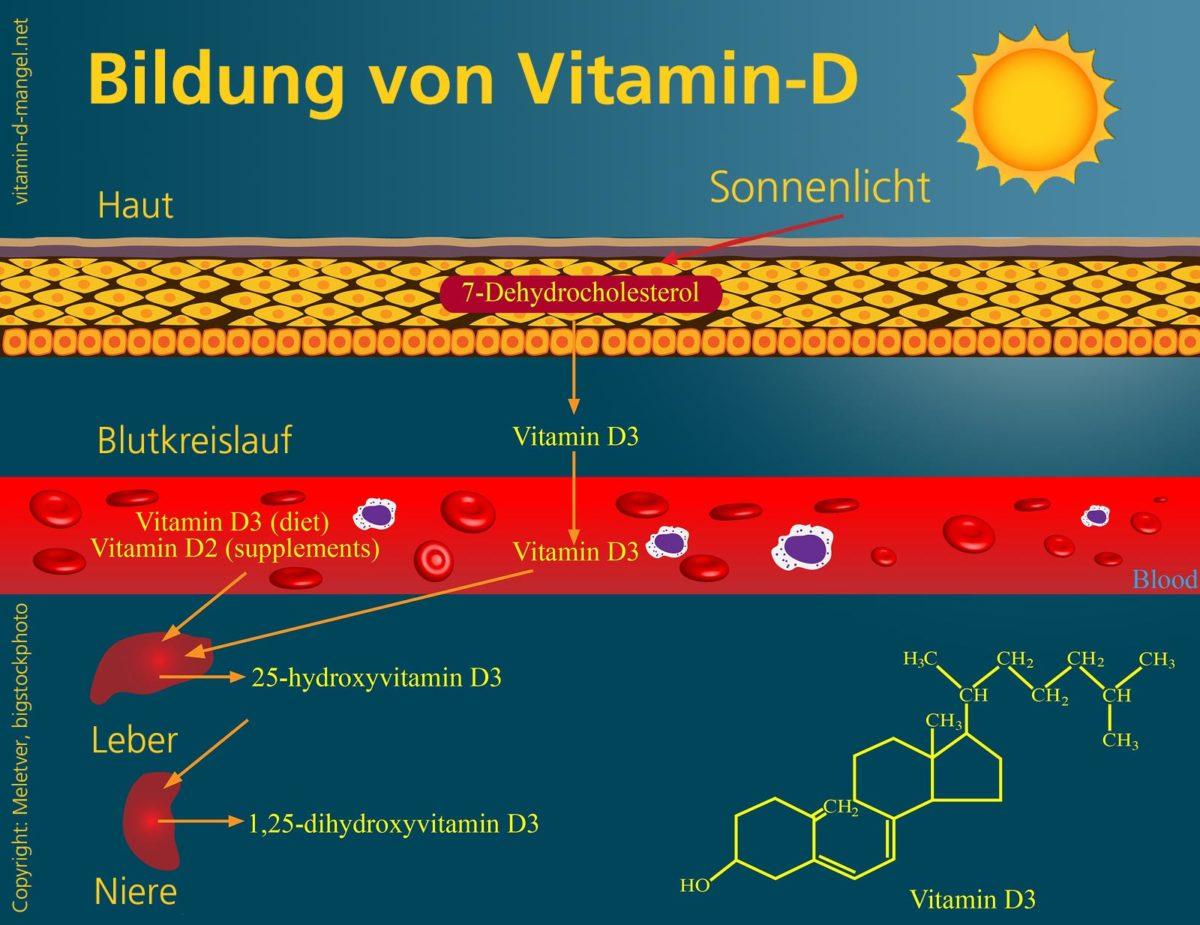 Bildung von Vitamin D Blutwerte